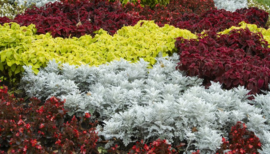 Plants require spacing in the flower bed for optimal growth.