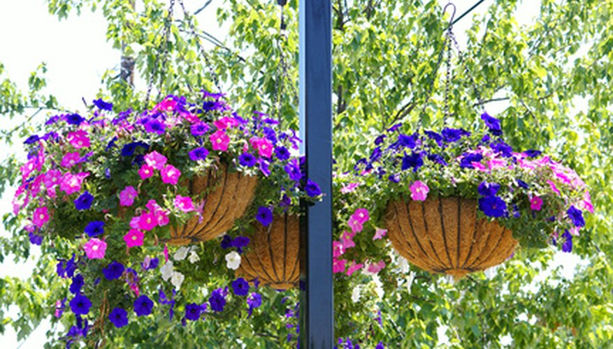 Liven up any space with beautiful hanging flowers.