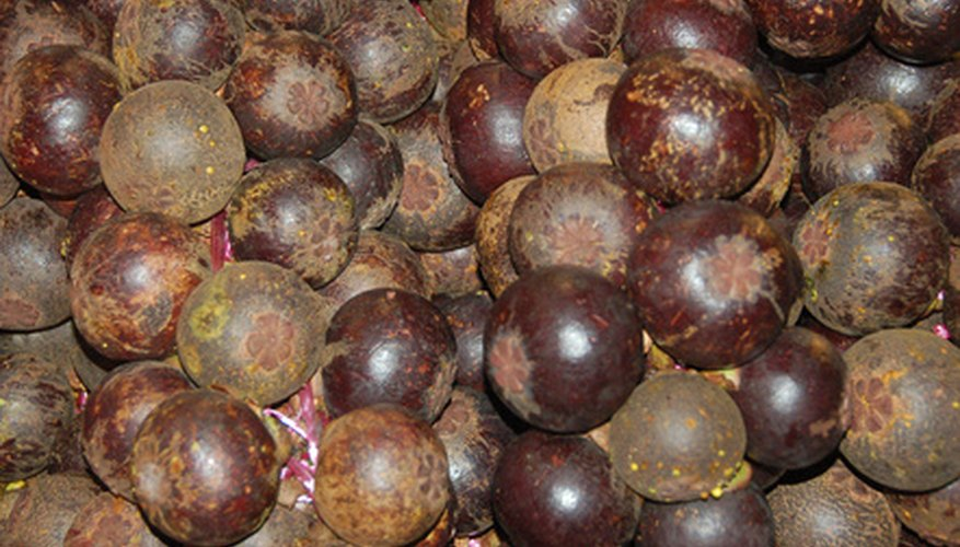 How to Grow Mangosteen From Seed | Garden Guides