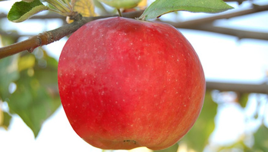 Apple orchards thrive across northern Michigan and peak at fall harvest time.
