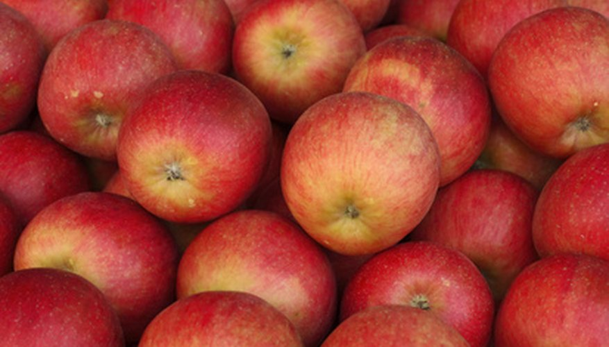 McIntosh is the most popular Wisconsin apple.