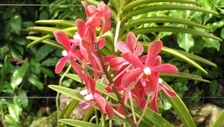 Singapore has many species of orchids.