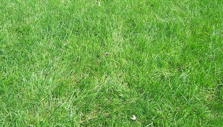 There are methods to help determine types of lawn grass