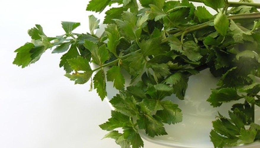 Herbs are aromatic and flavorful with many kitchen uses.