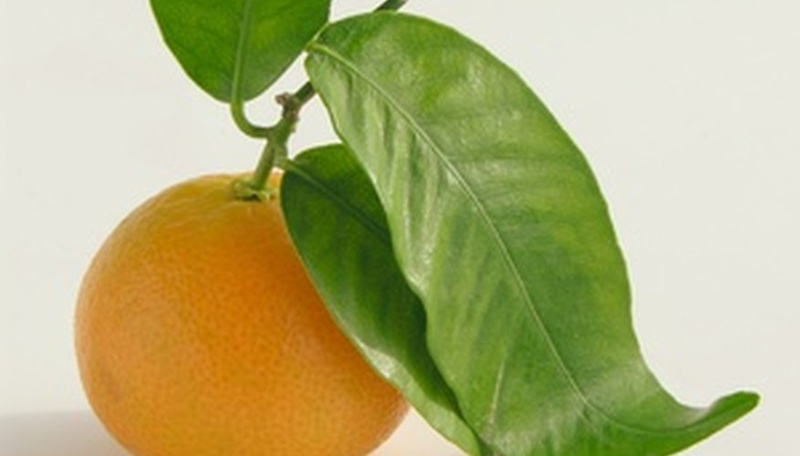 Citrus leaves can compost efficiently as long as prepared properly