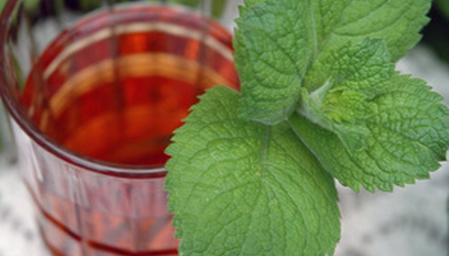 Mint is used in cooking because of its refreshing smell and taste.