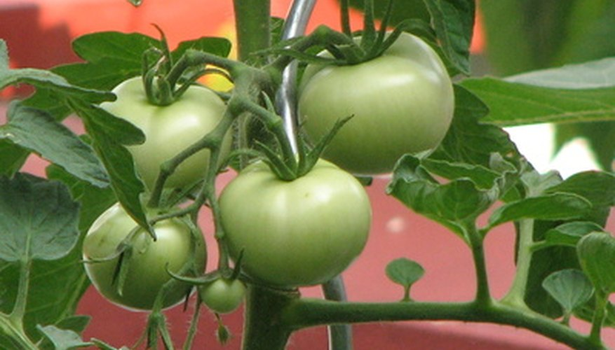 You can make your own pesticides for vegetable gardens to keep down costs.
