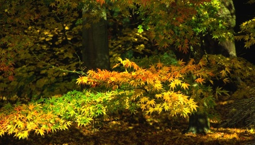 Gardeners have a wealth of choices in trees suitable for growing in partial shade.