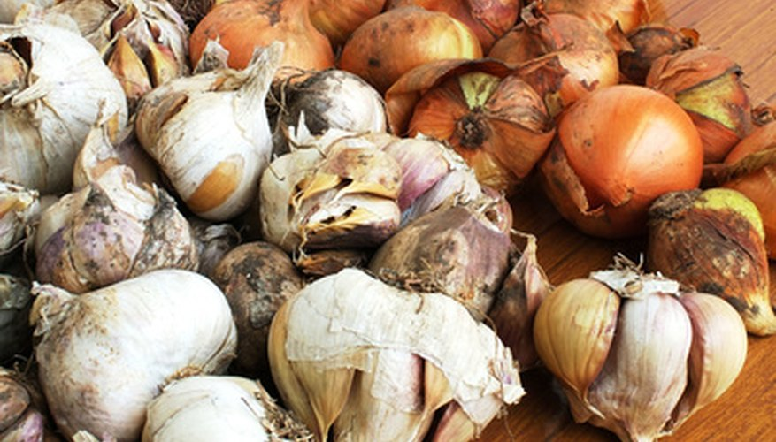 Onions and garlic are both types of allium.