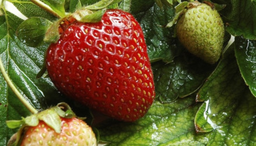 Strawberries can thrive in containers.