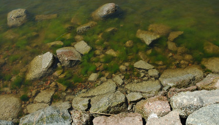 Algae becomes a problem when its growth is not regulated.