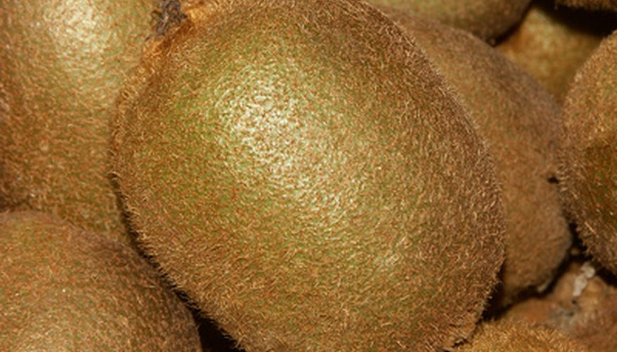 Kiwi fruit are heavy producers and need a strong support.