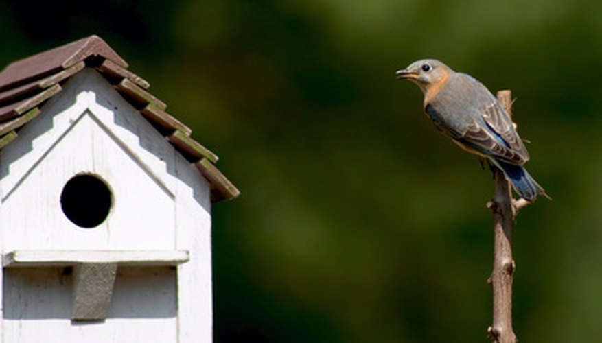Bluebirds are territorial, so proper spacing between their houses is necessary.