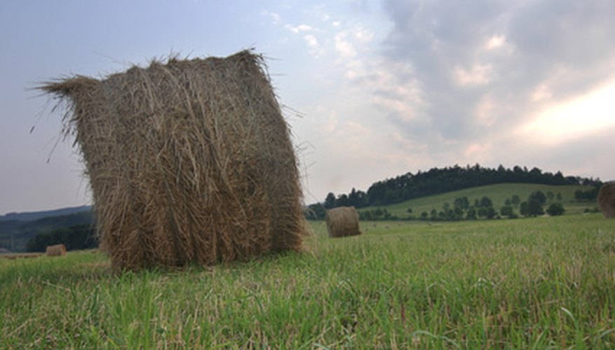 Both hay and straw are rolled up into bales.