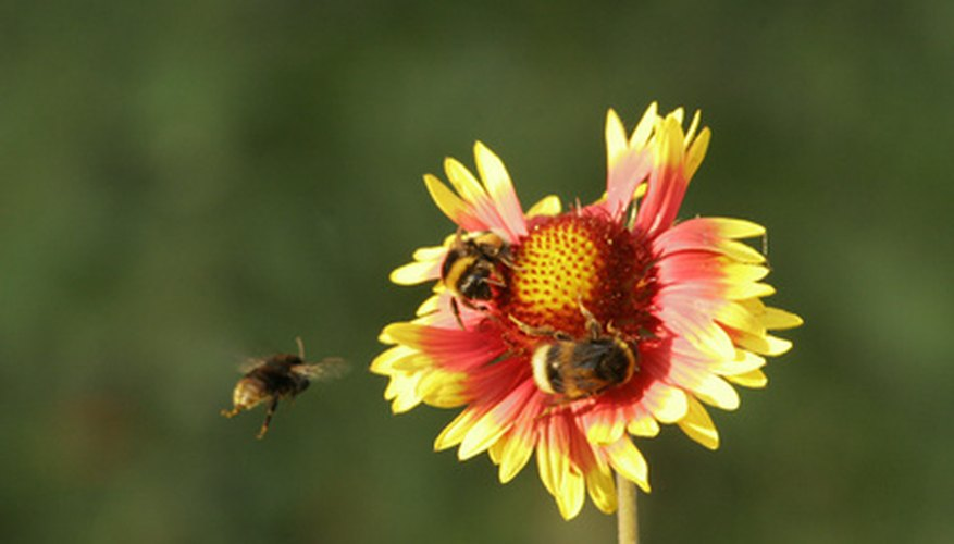 Bees frequent flowers that are open and easy to navigate.