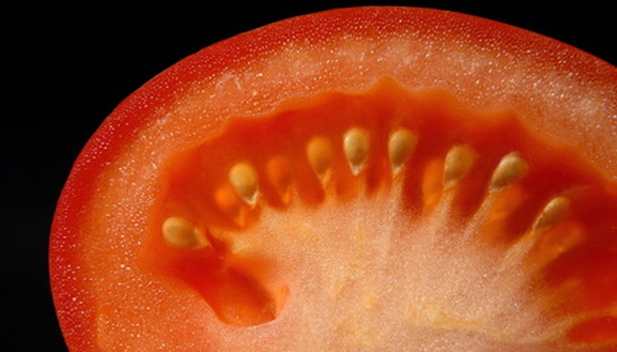 Each seed of a tomato fruit starts out as one ovule.