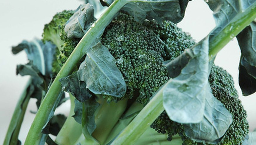 Add broccoli to your fall gardens.