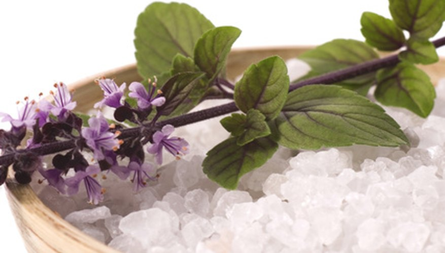 Thai basil is prized for its characteristic anise-like flavor.