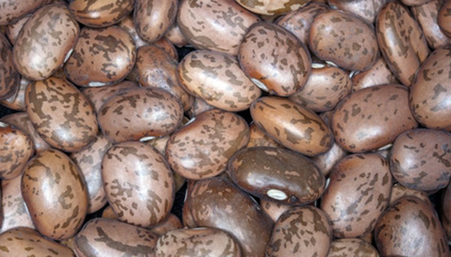 Pinto beans grow well in Louisiana.