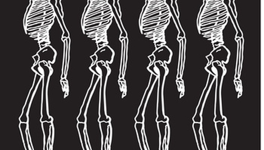 Anatomy pictures can help students build skeletons of their own.