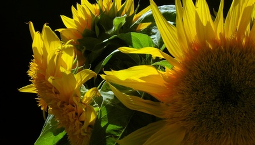 Sunflowers are a fitting tribute to a cheerful and bright life.