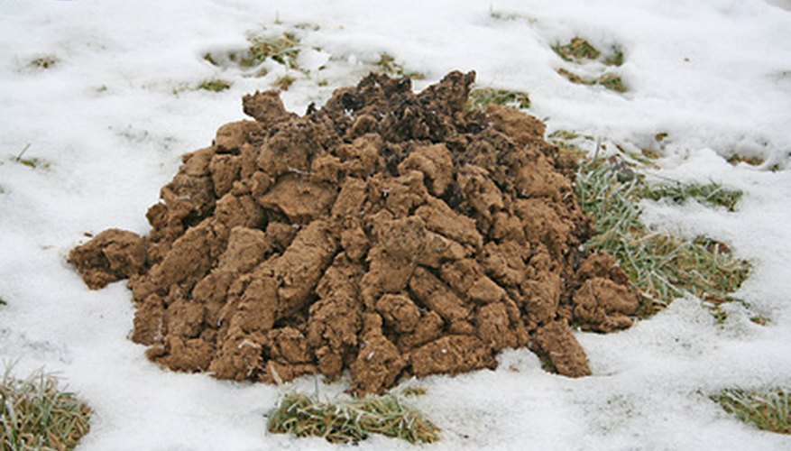 Mole are living in your yard if you see their excavation dirt, called molehills.