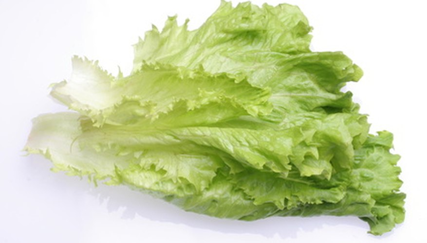 Leaf lettuce is a good choice for container gardening