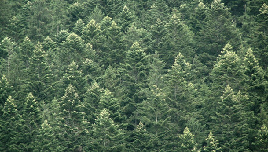 The Pacific Northwest is home to numerous evergreen trees and shrubs.