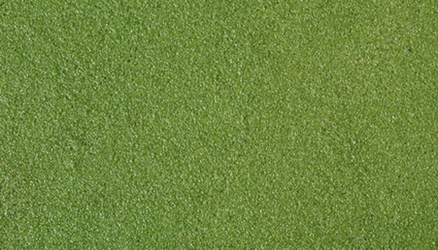 Duckweed is simple to grow, and takes over quickly.