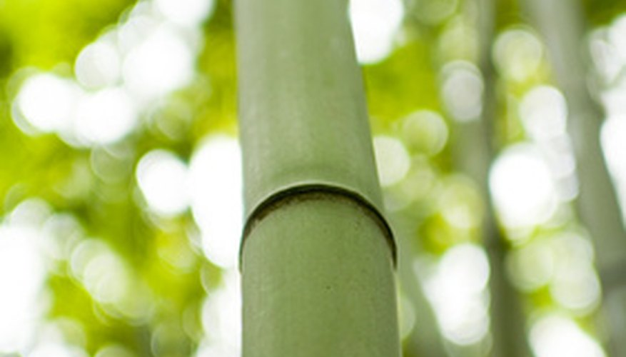 Bamboo borders are easy to plant and maintain.