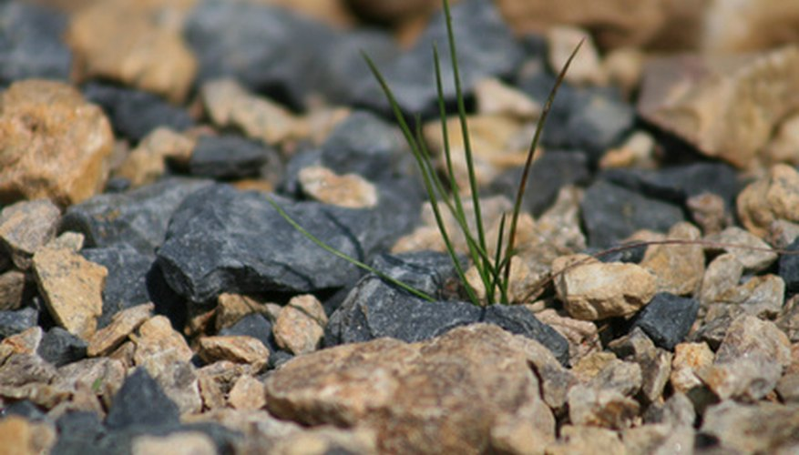 Kill grass in your gravel with simple home remedies