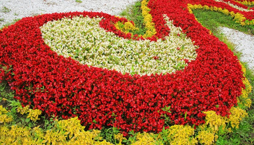 Border flowers in a colorful flower garden