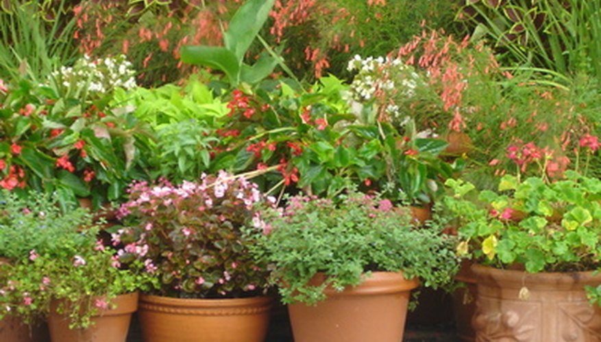 Many varieties of plants grow well inside containers situated in full sun.