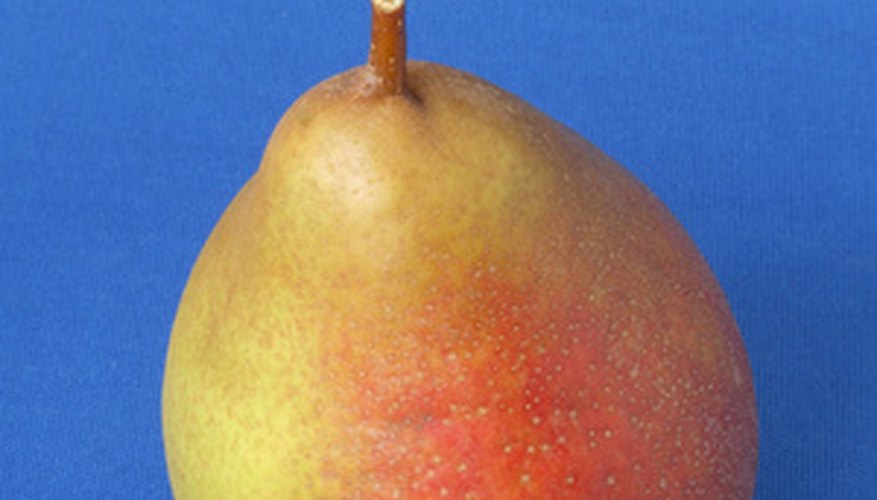 Like this fruit, Keifer pears are yellow with a red blush.
