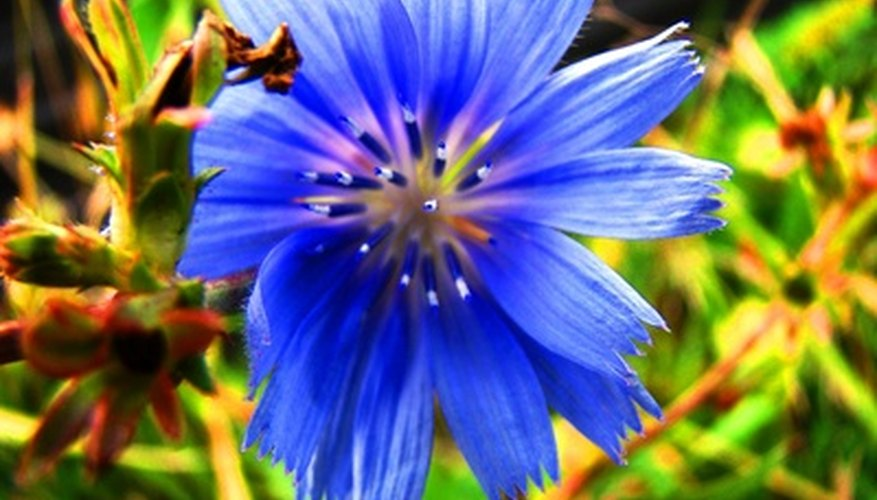 The cornflower has an intriguing background.