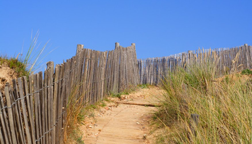 American beach grass helps with erosion control.