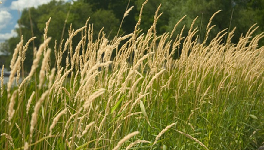 Grains and grasses prefer silty soils.