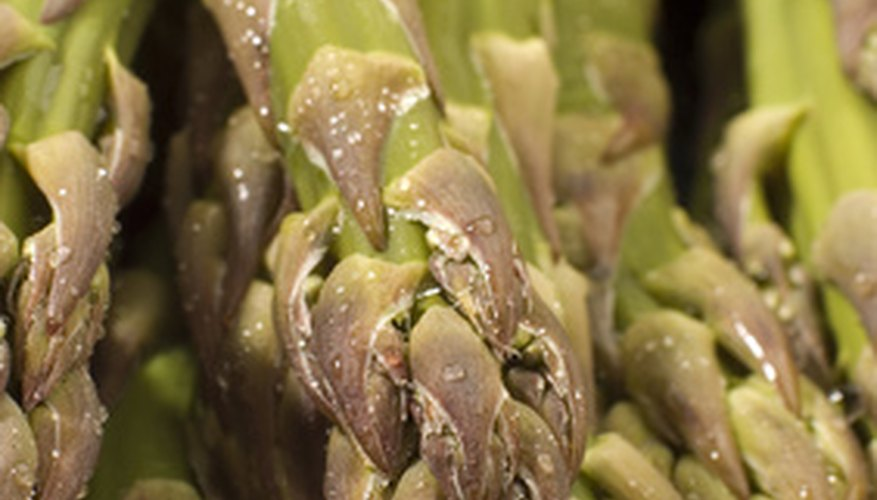 Asparagus is a perennial vegetable.