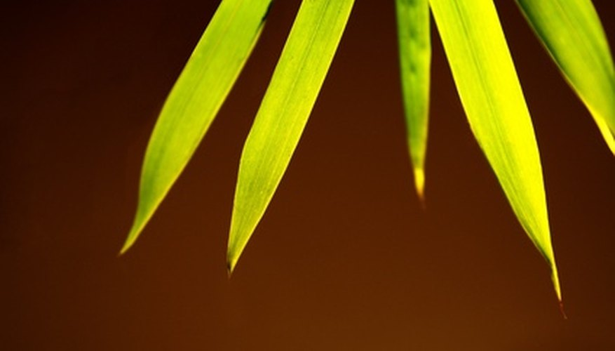 Bamboo can benefit greatly from supplimental fertilization