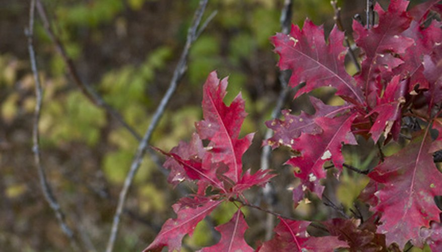 There are many attractive shrubs that thrive in the shade in Minnesota.