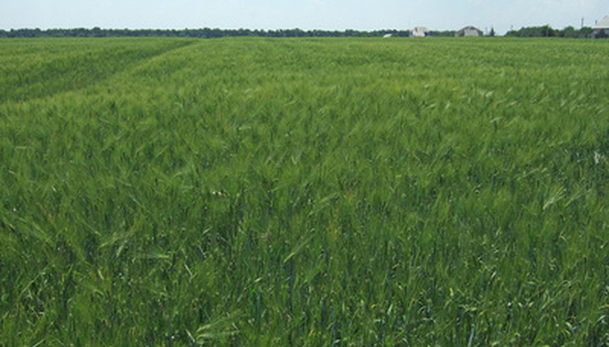 Crops that do not struggle against weeds produce bigger, stronger plants.