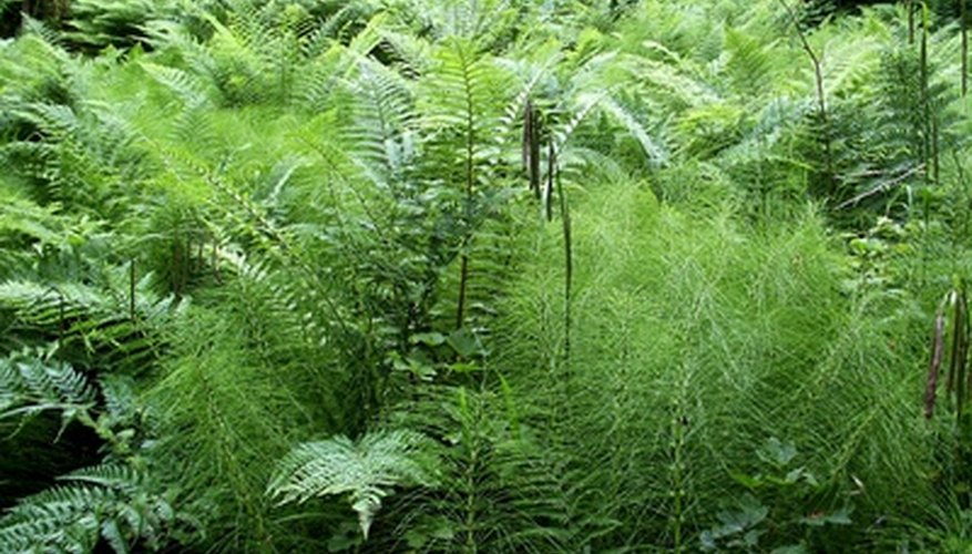 Ferns love shade and moisture.