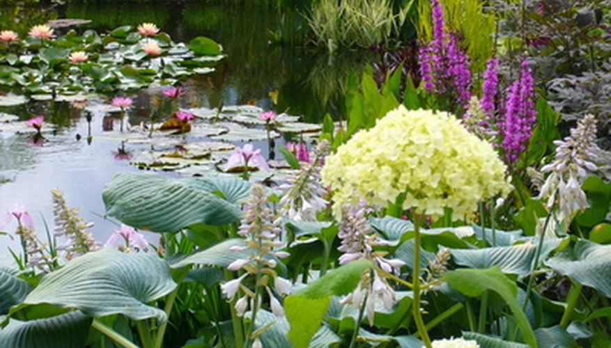 Create a natural landscape with a water garden.