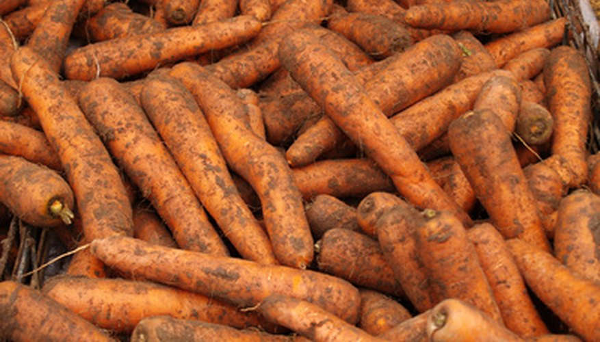 You can store carrots grown in the spring until winter.