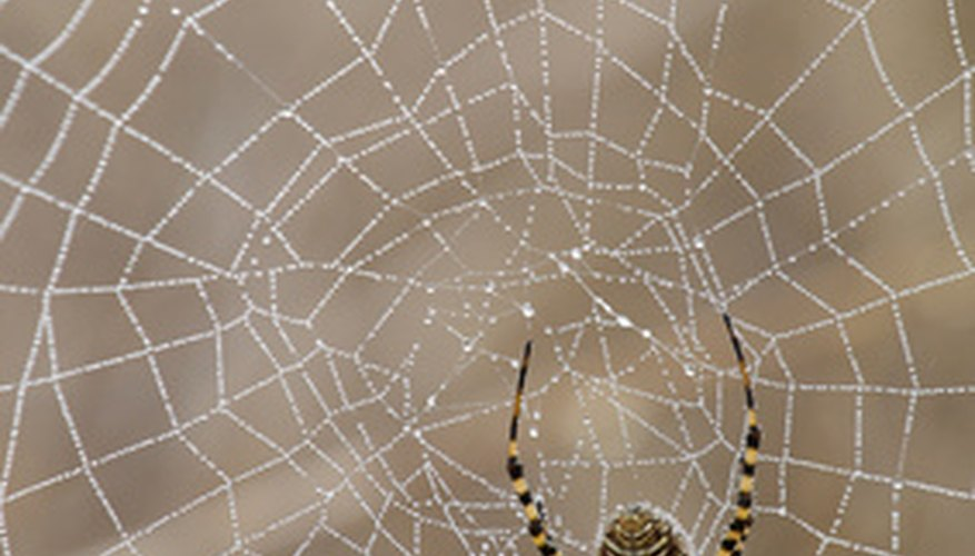 Spiders should only appear scary to garden pests, not the gardener.