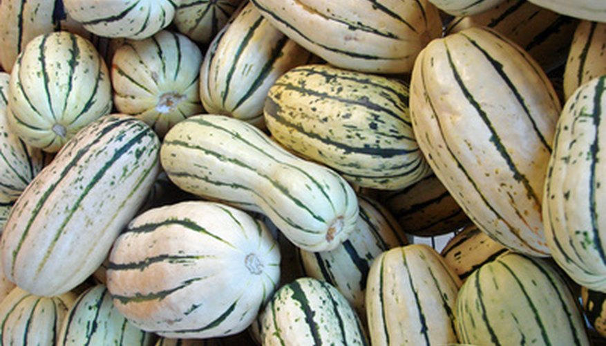 Toast delicata squash seeds for a satisfying snack.