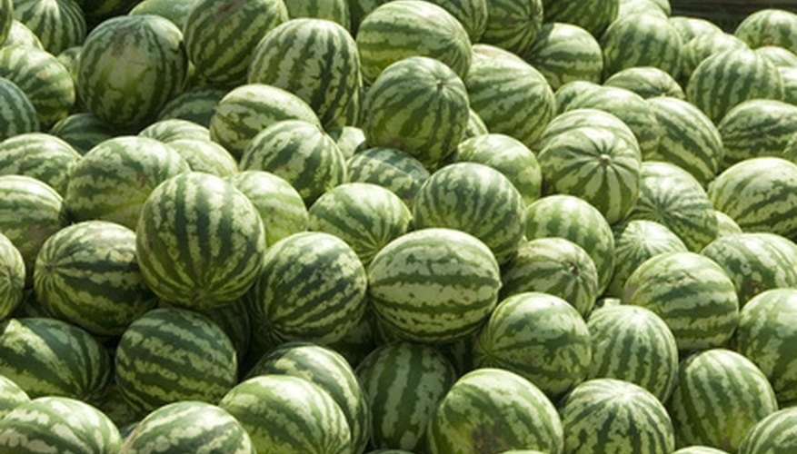 Watermelons require warm soil and air.