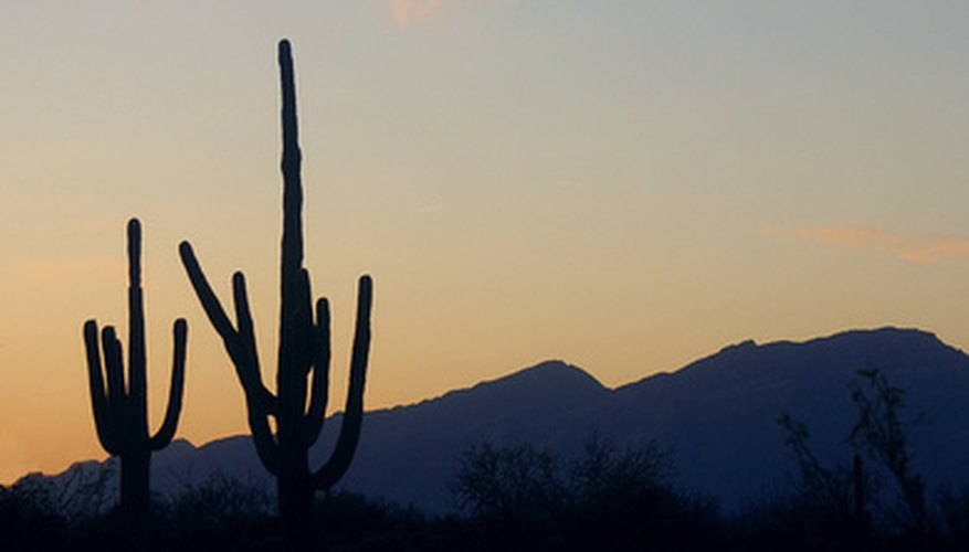 Arizona has a surprisingly rich variety of plant life, considering its summer heat and sandy soil.
