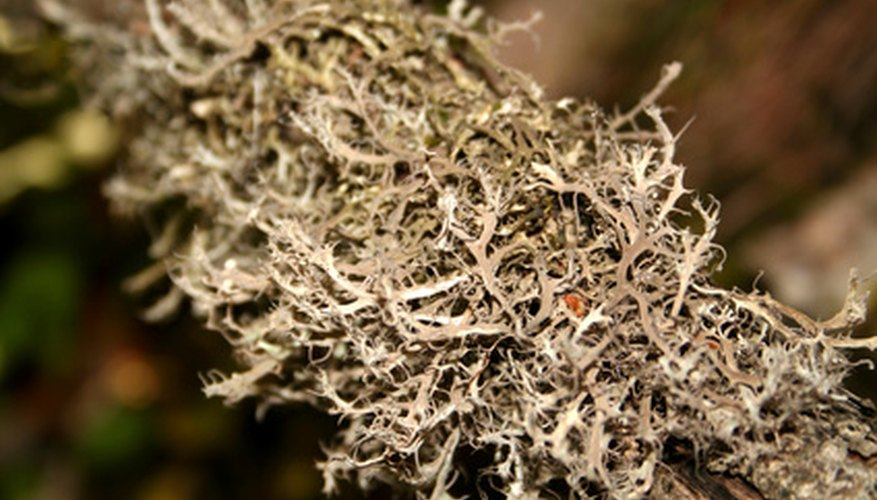 Partially decayed sphagnum moss is a popular soil amendment for home gardens.