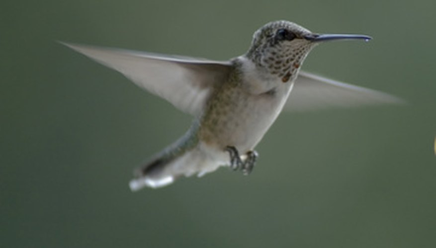 Hummingbirds are attracted to bright flowers.